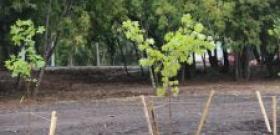 В Перми собираются провести озеленение объектов дорожной реконструкции
